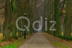 Qdiz Stock Photos | Long Alley Trees with Powerful Trunks in Autumn,  #alley #autumn #avenue #background #branch #colorful #day #environment #fallen #foliage #footpath #golden #grass #green #ground #lamp #landscape #lane #leaf #leaves #line #lush #nature #nobody #outdoor #park #path #pathway #powerful #road #row #scenery #season #tranquil #tree #trunk #walkway #way #wood #yellow