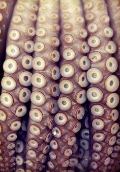 Octopus tentacles.