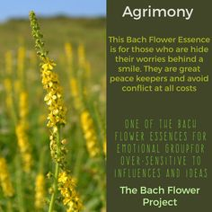 Bach Flower Remedy - AGRIMONY