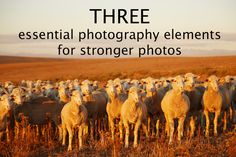 If you are a beginner photographer these are three essential elements you need to understand to start to see your photography improve #iproveyourphotography #photographyforbeginners #beginnerphotographylessons #photographytips #beginnerphotographytips Photography Tips For Beginners, Free Photography, Photography Lessons, Essential Elements, Great Places, Your Photos, Improve Yourself, Essentials, How To Get