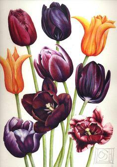 """Tulip impression   Aquarelle de fleurs   7 """"x 11""""   Art botanique   Impression d'une aquarelle originale   Fleurs de printemps   Helen Lush"""