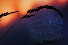 Shooting this simple web in wheat grass opened my eyes up a bit to the world of nature and landscape photography. I was primarily interested in only wildlife photography until this...sounds silly, but this was one of those moments for me.