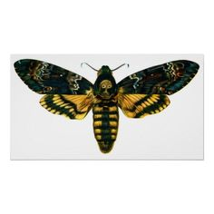 I think this would be nice for my left arm? I want this as my first tattoo. A deaths head hawk moth. Moth Tattoo Design, Moth Drawing, Skull Moth, Old Book Art, Large Moth, Deaths Head Moth, Sphinx, Hawk Moth, Tatoo
