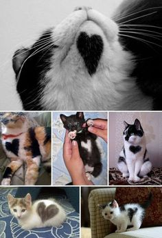 Cats with 10 hearts...they have 9 lives, so therefore 9 hearts + the extra visible 1 makes 10 :)
