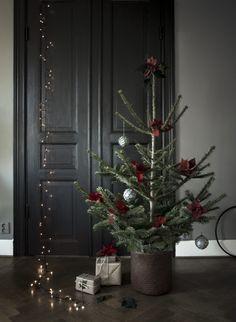 Blomsterframjandet_rod_julstjarna