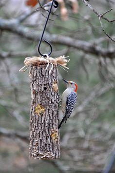 DIY Suet Log Bird Feeder via The Garden Roof Coop. A bird feeder kids can make themselves!