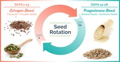 "How seeds can help regulate and support our menstrual cycle through ""seed rotation"". How seed rotation boosts estrogen and progesterone levels in women."