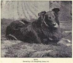 1891 Collie photo 1891_Collie.jpg