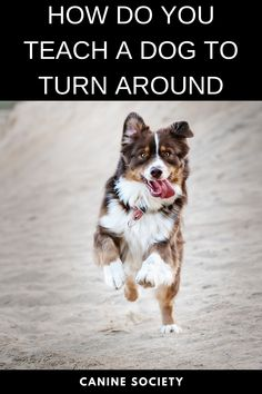 """How Do You Teach A Dog To Turn Around You can train your dog to do a lot of cool things, like picking up your toys or hugging you. But teaching him certain practical tricks, such as how to turn on command, is also worthwhile. In a variety of situations """"Turn"""" can be useful — everything from changing direction on a walk to steering away from a dangerous or problematic situation. Dog Training School, Training Your Puppy, Dog Commands Training, Dog Health Tips, Pet Health, Best Friends For Life, Dog Teeth, Dog Hacks, How To Train Your"""