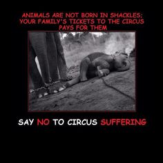 This is truly heartbreaking :( and why I DO NOT SUPPORT ANY CIRCUS! These animals belong in their natural environment living their lives as they were meant to - NOT tortured to perform demeaning tricks for human entertainment. A circus is no better than the likes of those things that took place in the Roman colosseum. Sham on those who run and those who support circuses. They should be banned!