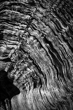 Photograph by Stuart Litoff.  #Abstract photo of the #rings on a #stump of a #dead #tree, taken on the #ChimneyRock #hiking #trail at the #GhostRanch near #SantaFe, #NewMexico