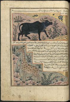 Adjâ'ib al-makhlûqât wa gharâ'ib al mawdjûdât, by Zakariyyā ibn Muḥammad ibn Maḥmūd al Qazwīnī, (ca.1203-1283), Ms 1130 Bordeau, f147