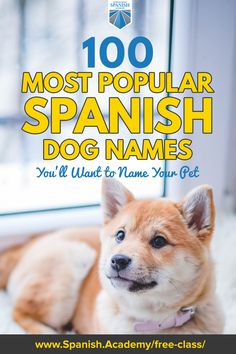 Has your love for the Spanish language inspired you to seek out the best Spanish dog names for your furry best friend? Choosing a dog name is so much fun. If you're looking for a unique pet name to show off how truly special your mascota is, try one of these Spanish dog names on our list of favorites. To learn more, visit our blog post. #dognames #dogs #spanishdogs #bilingual #homeschool Corgi Names, Pet Names, Spanish Names, Spanish Class, Dogs Names List, Dog Names Unique, Spanish Online, Choosing A Dog, Name List