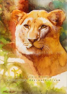 The lioness - watercolor study by AuroraWienhold.deviantart.com on @deviantART