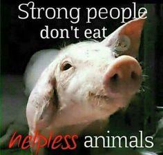 Animal Rights & Vegan Resources Vegan Memes, Vegan Quotes, Vegan Facts, Vegetarian Facts, Vegan Vegetarian, Mon Combat, Reasons To Be Vegan, Why Vegan, Believe