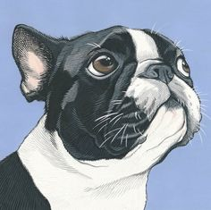 Why These Boston Terrier Pillows? Boston Terriers are said to be one of the rare dog breeds that has no body odor, but they also fart a lot. They have a big attitude Dog Tattoos, Cat Tattoo, Boston Terrier Art, Boston Terrier Tattoo, Guache, Cat Design, Dog Portraits, Watercolor Portraits, Watercolor Painting