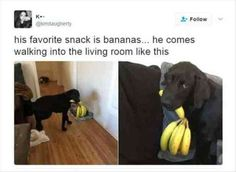 60 Funny Animal Pictures