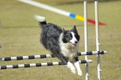 Intro to Agility Class