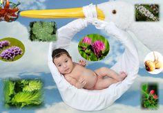 Heilkräuter bei Kinderwunsch und Fruchtbarkeit