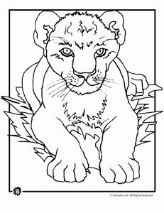 pictures baby lion king coloring pages coloring pages for later