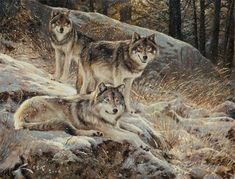 wolves art   Wolves of the North. Wildlife Art of Manuel Sosa. Paintings and Prints