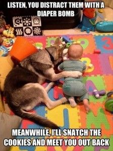 funny babies and dogs