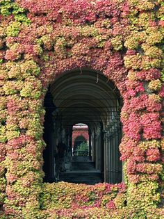 A door alive with fragrant flowers // Croatia, Zagreb, arkade, Mirogoj // pink and black photography