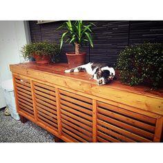 庭を改造✨✨✨ 室外機カバーを、ゴリラが手作りしてくれた❤️ありがとう shimbaも、ご満悦 庭が綺麗だと、テンション上がるね 仕上がりは、ロンハーマン風に #庭 #ロンハーマン風 #shimba #愛猫 #kitty #cat #快適空間 #ワイヤープランツ #西海岸 #ステイン #ペンキ #DIY #室外機カバー