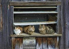 Barn Cats by Patricia Davis on Capture My Vermont