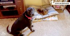 Cat Thieves Crack Me Up! Dogs, Watch Out And Protect Those Beds! LOL! | The Animal Rescue Site Blog