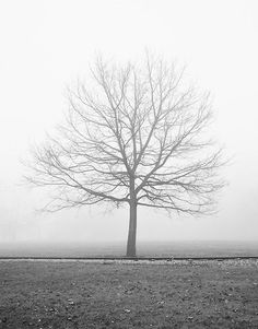 Vanilla Dream, Autumn Fog, Black and White Landscape Photography - Black and white landscape photograph of a bare tree in a foggy park. #LandscapeBlackAndWhite