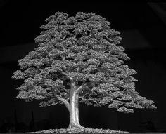 Woodbranch by kaitrees.deviantart.com on @DeviantArt