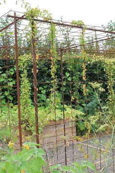 S'aménager un espace pour plantes grimpantes avec du fer à béton et treillis soudé