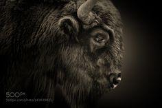 http://ift.tt/1K6283m #animals The portrait by studio-flash http://ift.tt/1Tzjyaz #pierceandbiersadorf