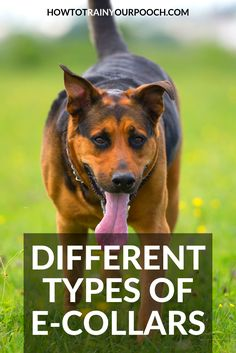 If you're wondering what is an e collar for dogs then this is the article for you. Contains a guide to different types of e collar and their uses. Best Bark Collar, Anti Bark Collar, Bark Collars For Dogs, Electronic Dog Collars, E Collar Training, Leash Aggression, Best Dog Training, Training Tips, Dog Shock Collar