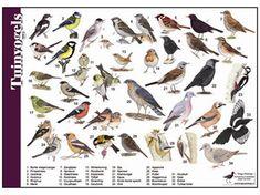 Animal Plates, Garden Animals, Outdoor Classroom, Kinds Of Birds, Wild Nature, Flora And Fauna, Animals Of The World, Bird Watching, Natural History