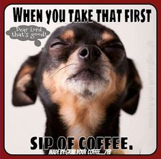Awww, this looks like my old dog, Squirt! I miss her!!! Yesss...so good!