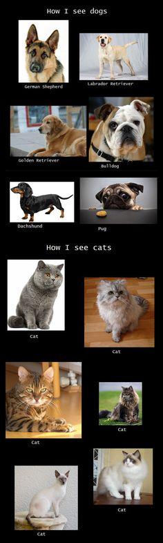 How I see dogs vs. how I see cats. - This used to be me until I got my first kitten.