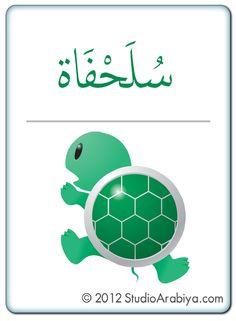 11Flash Cards - Animals