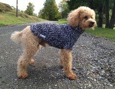 Fisherman Rib Dog Sweater by Charliecloset on Etsy, $45.00