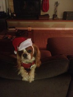Merry Christmas! Love Lilly