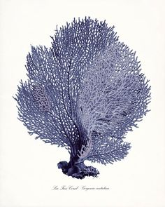 Coastal Decor Sea Fan Sea Coral Giclee Art by vintagebytheshore