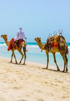 """""""Intricately linked with Omani tradition and culture, the camel is an integral part of the country's culture and history, stemming back to references in the Koran."""" Oman: The Bradt Guide. www.bradtguides.com"""