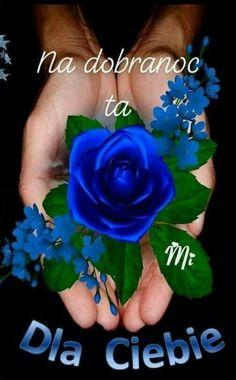 Good Night, Good Morning, Gifs, Humor, Facebook, Funny, Places, Nighty Night, Bom Dia