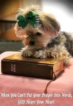 Even Yorkies realize that reading their Bibles is a good thing!