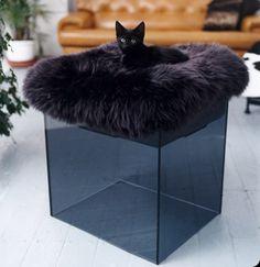 Cat bed ...