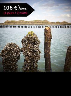 Escapade Grande Marée Partez à la découverte d'une activité économique traditionnelle et artisanale de la Côte d'Emeraude : La conchyliculture (culture des moules et des huîtres). Après une balade commentée au milieu des bouchots et des parcs à huîtres, vous serez conduits chez un producteur pour y découvrir les étapes de la vie des coquillages, de leur naissance à leur commercialisation. Votre visite se terminera ensuite par une dégustation d'huîtres. Crédit photo : A.Lamoureux