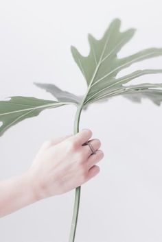ring /Nancy/ Anna Lawska Jewellery  photo - Piotr Czyż Suculentas Cactus, Jewellery Photo, Plants Are Friends, Limited Collection, Minimalist Lifestyle, Floral Bouquets, Go Green, Hana, Botany