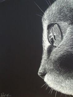 "eatsleepdraw: "" Scratch Art Cat by FoxyRM "" Scratch Art, Art Techniques, Online Art Gallery, Line Drawing, Illustration Art, Classy, Drawings, Animals, Animales"