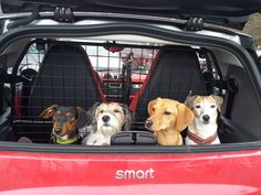 fortwo with four dogs